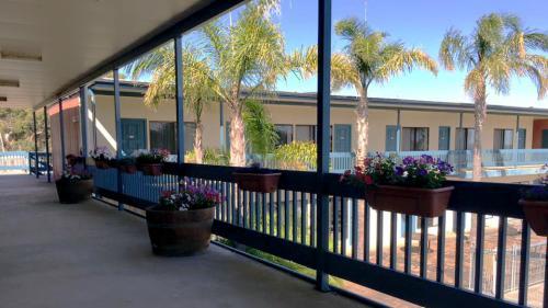 balcony pansies kingsgate_edt